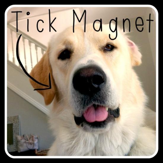 Tick-Magnet